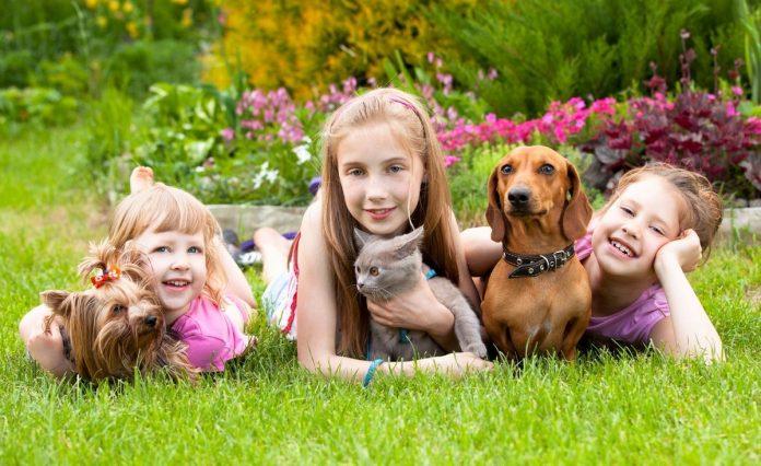 animale de companie copii