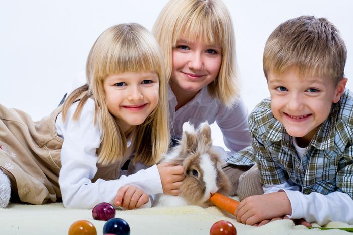animale de companie iepuri
