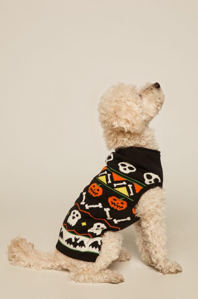 pulover pentru catei